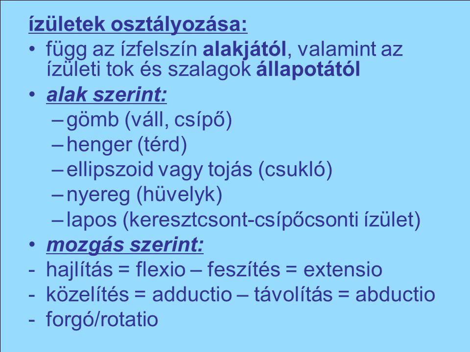 ízületek osztályozása: