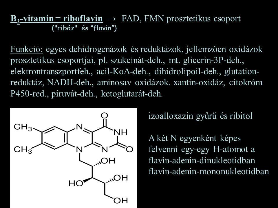 B2-vitamin = riboflavin → FAD, FMN prosztetikus csoport