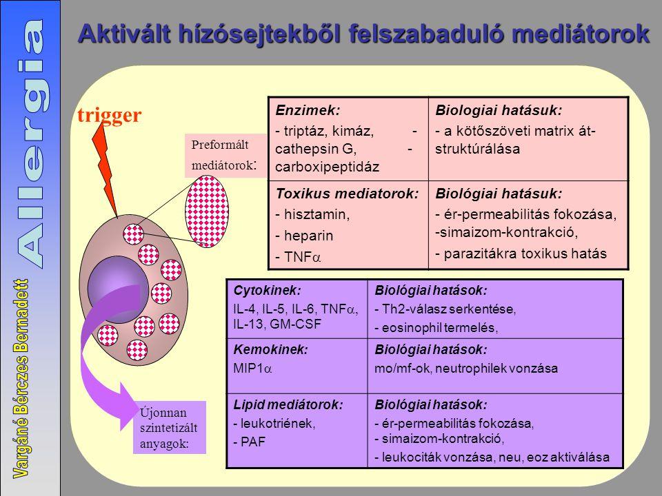 Aktivált hízósejtekből felszabaduló mediátorok