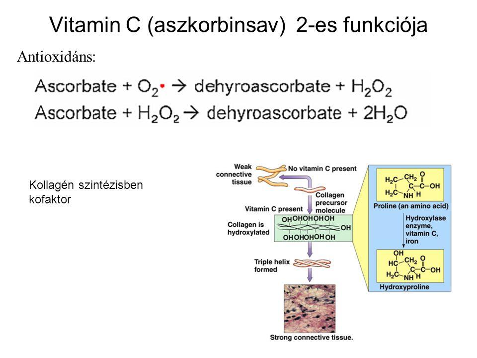 Vitamin C (aszkorbinsav) 2-es funkciója