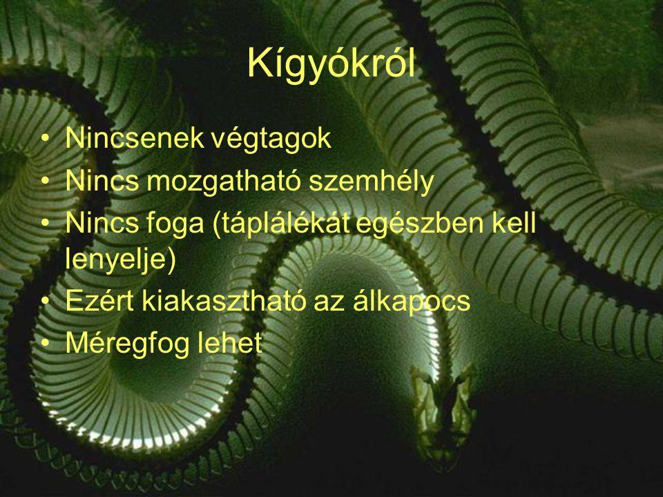 Kígyókról Nincsenek végtagok Nincs mozgatható szemhély