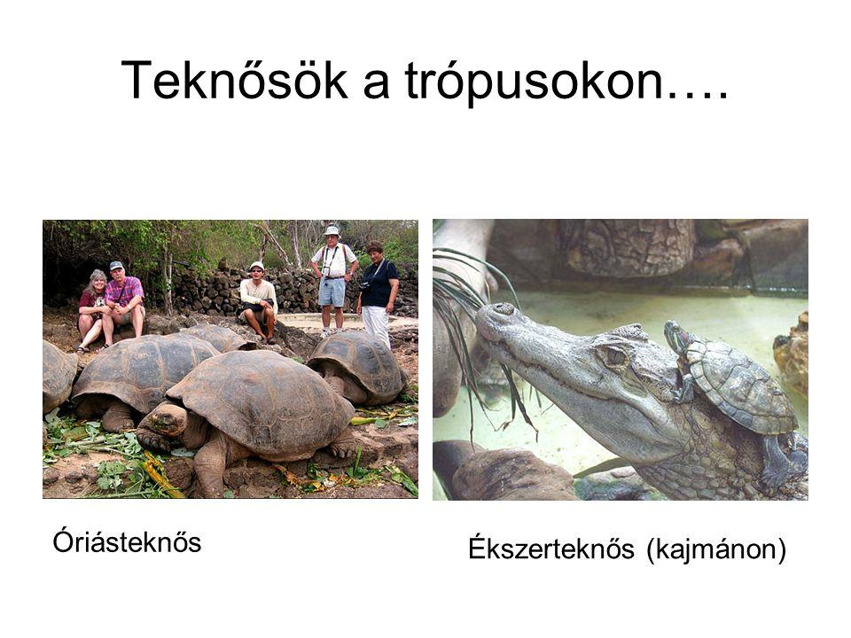Teknősök a trópusokon….