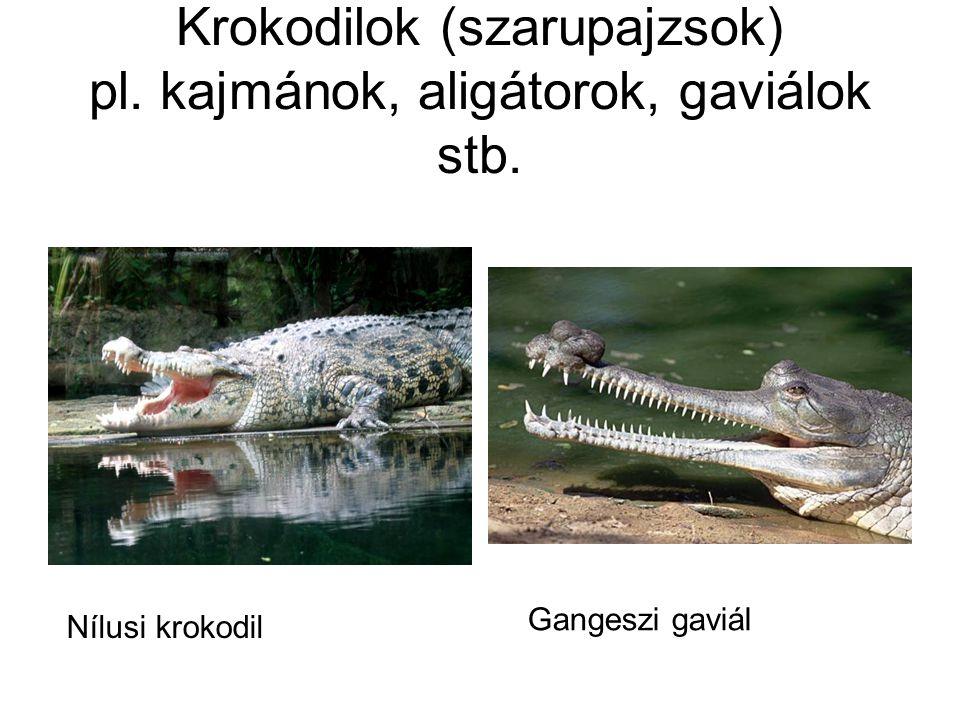 Krokodilok (szarupajzsok) pl. kajmánok, aligátorok, gaviálok stb.