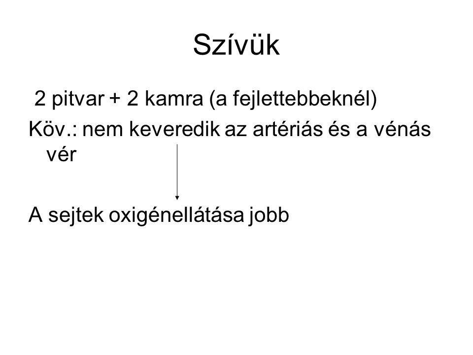 Szívük 2 pitvar + 2 kamra (a fejlettebbeknél)