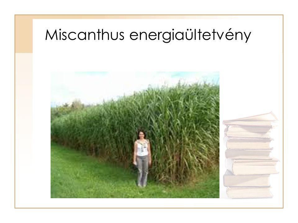 Miscanthus energiaültetvény