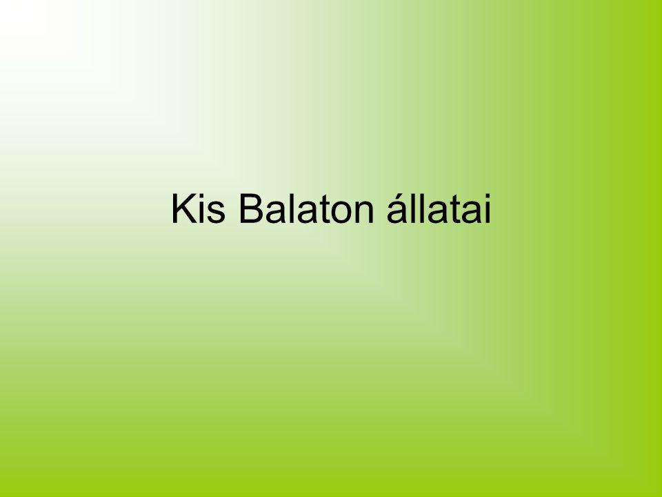 Kis Balaton állatai