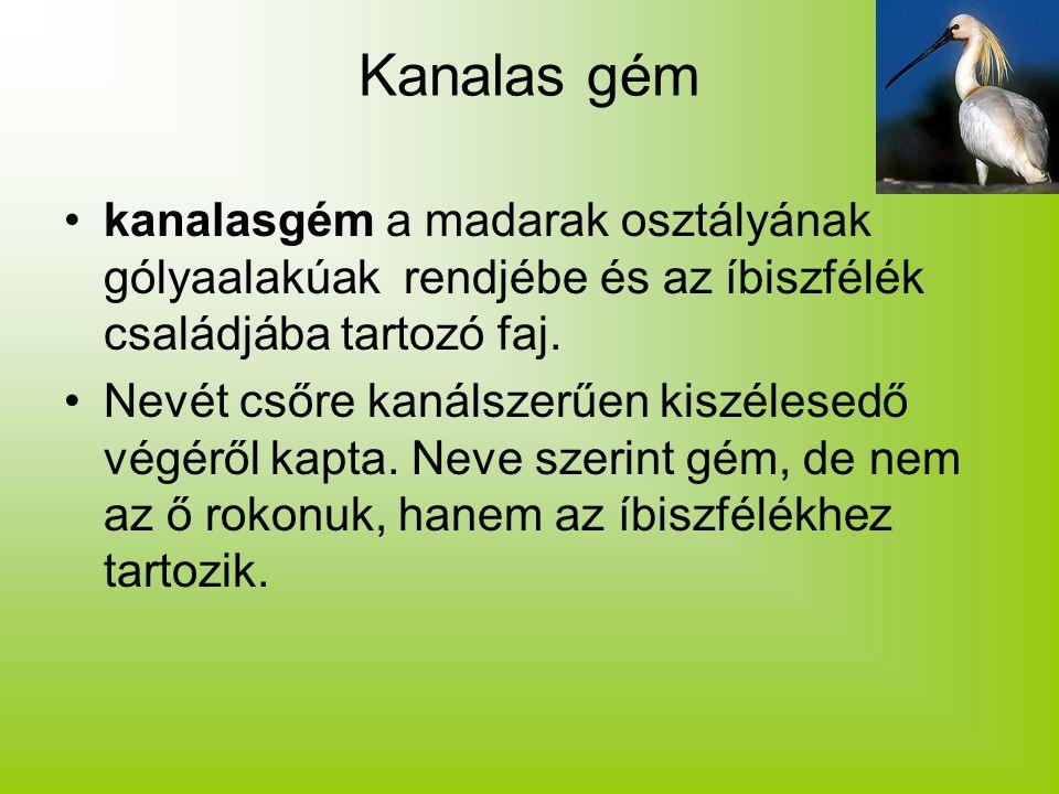 Kanalas gém kanalasgém a madarak osztályának gólyaalakúak rendjébe és az íbiszfélék családjába tartozó faj.