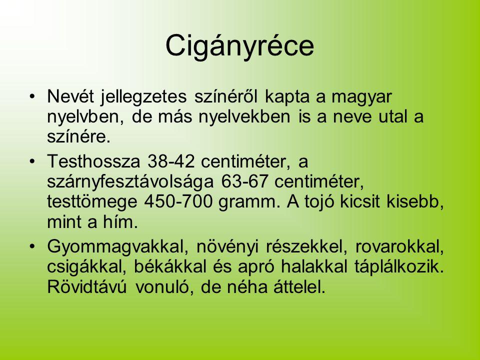 Cigányréce Nevét jellegzetes színéről kapta a magyar nyelvben, de más nyelvekben is a neve utal a színére.
