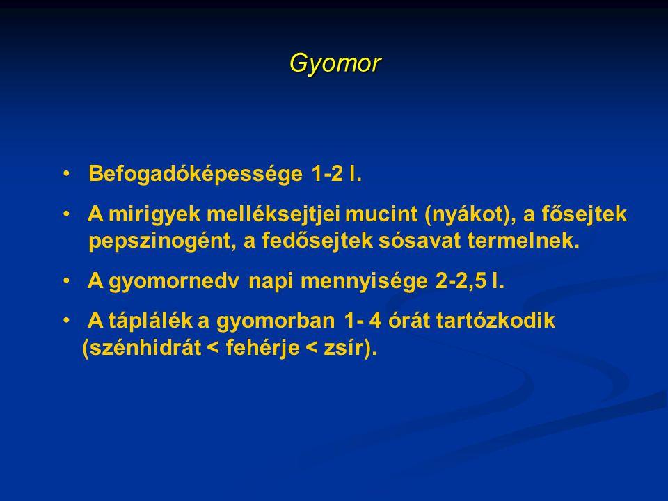 Gyomor Befogadóképessége 1-2 l.