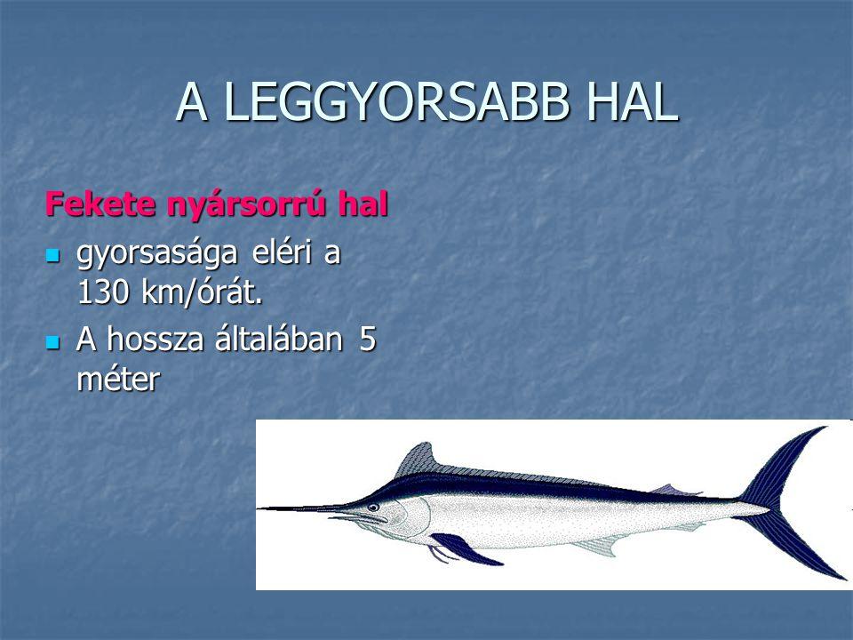 A LEGGYORSABB HAL Fekete nyársorrú hal gyorsasága eléri a 130 km/órát.