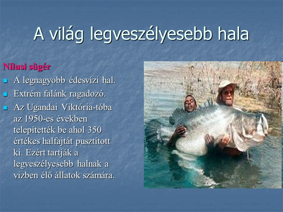 A világ legveszélyesebb hala
