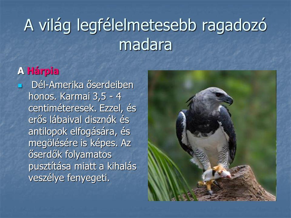 A világ legfélelmetesebb ragadozó madara