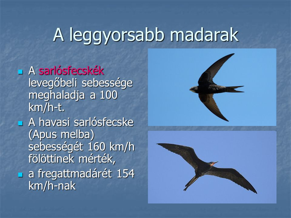 A leggyorsabb madarak A sarlósfecskék levegőbeli sebessége meghaladja a 100 km/h-t.