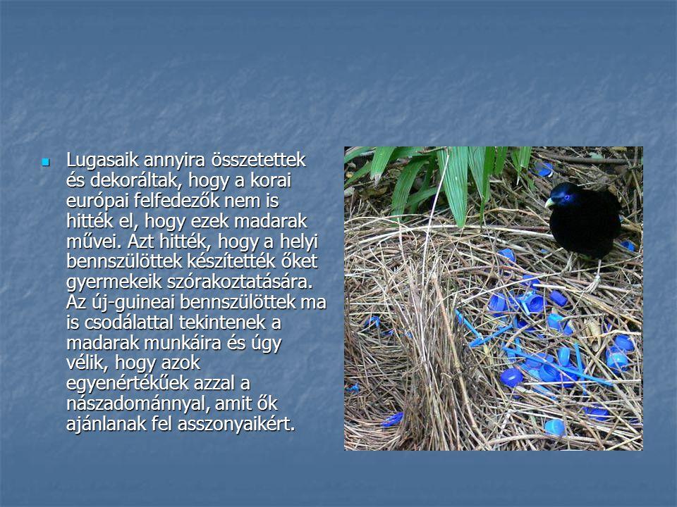 Lugasaik annyira összetettek és dekoráltak, hogy a korai európai felfedezők nem is hitték el, hogy ezek madarak művei.