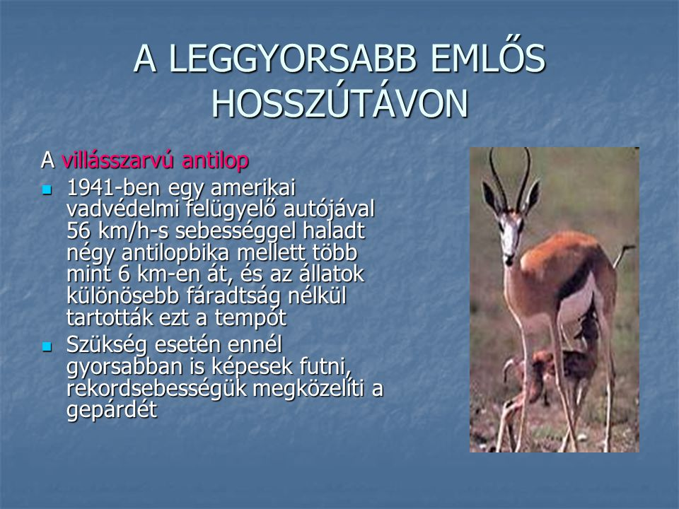 A LEGGYORSABB EMLŐS HOSSZÚTÁVON