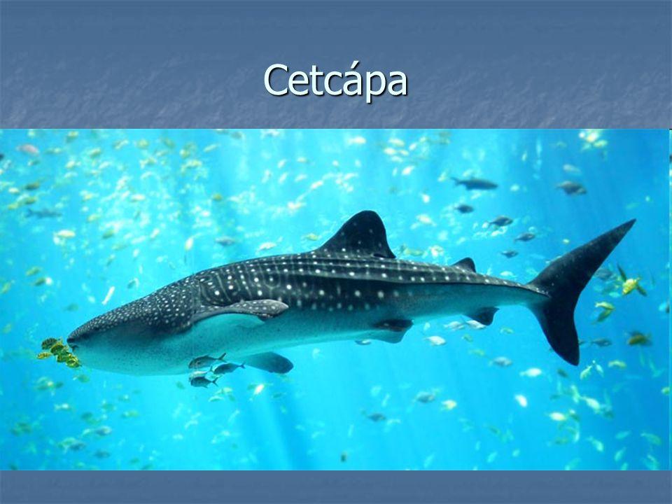 Cetcápa