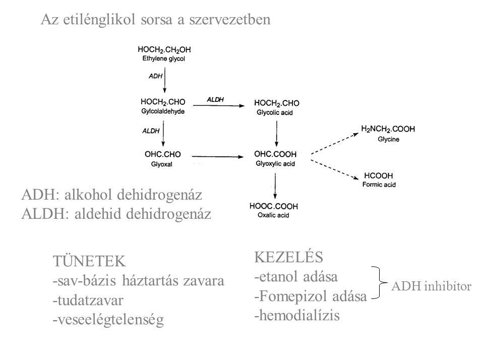 Az etilénglikol sorsa a szervezetben