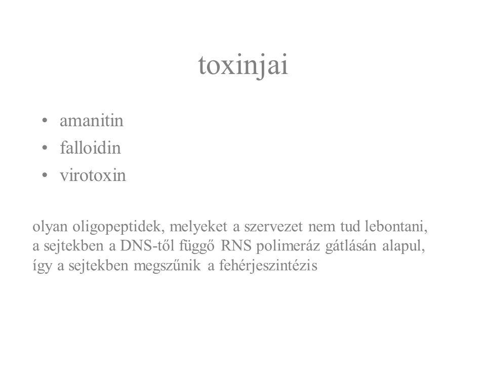 toxinjai amanitin falloidin virotoxin