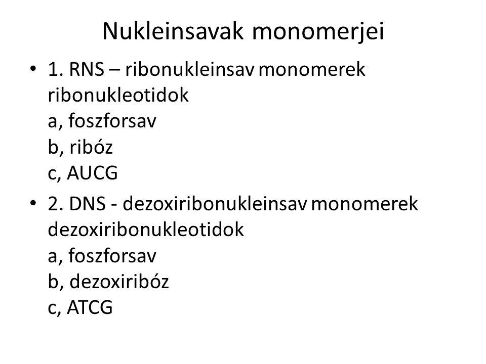 Nukleinsavak monomerjei