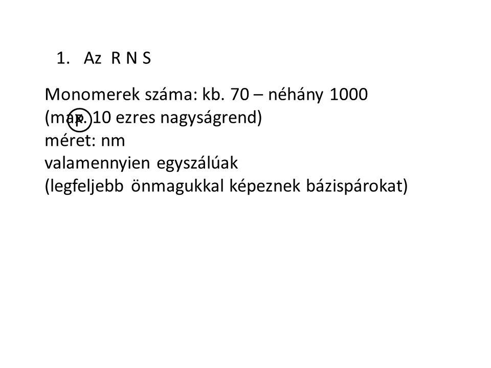 1. Az R N S Monomerek száma: kb. 70 – néhány 1000. (max. 10 ezres nagyságrend) méret: nm. valamennyien egyszálúak.