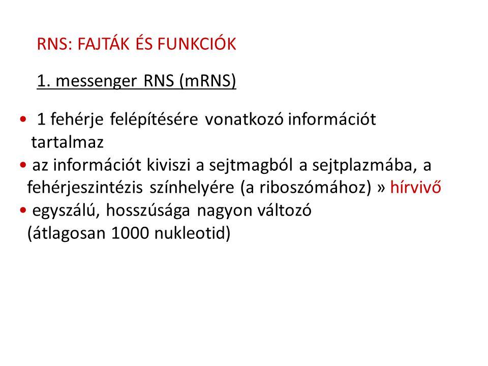 RNS: FAJTÁK ÉS FUNKCIÓK