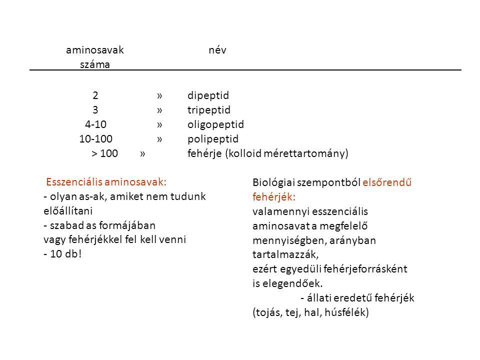 2 » dipeptid 3 » tripeptid. 4-10 » oligopeptid. 10-100 » polipeptid. > 100 » fehérje (kolloid mérettartomány) Esszenciális aminosavak: