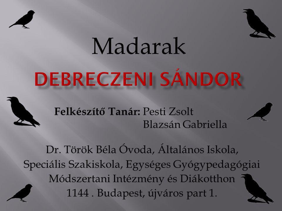 Madarak Debreczeni Sándor
