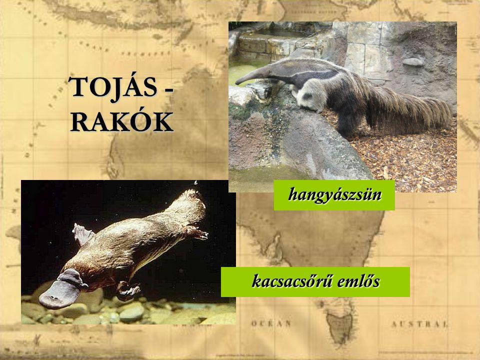 TOJÁS - RAKÓK hangyászsün kacsacsőrű emlős