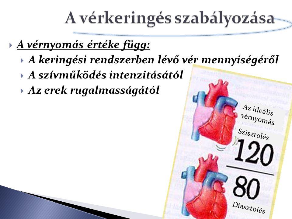 A vérkeringés szabályozása
