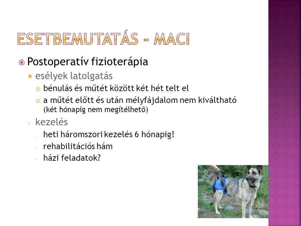 Esetbemutatás - Maci Postoperatív fizioterápia esélyek latolgatás