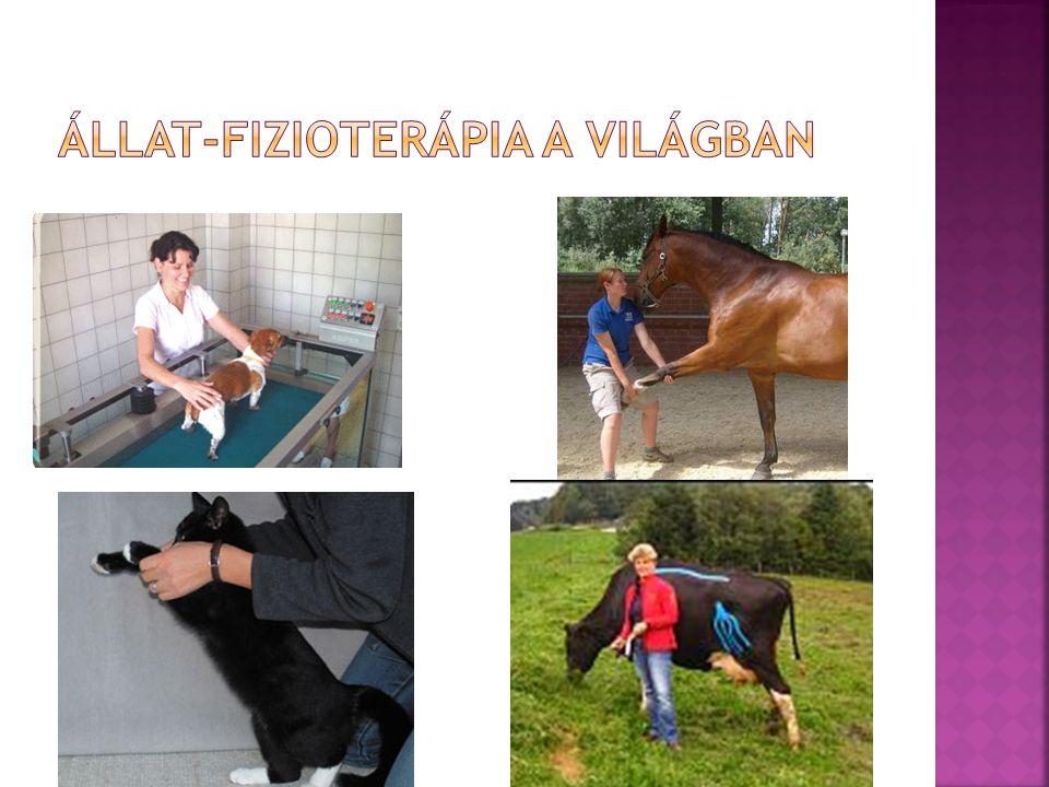 Állat-fizioterápia a világban