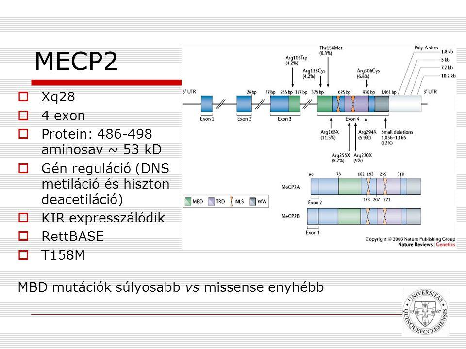 MECP2 Xq28 4 exon Protein: 486-498 aminosav ~ 53 kD