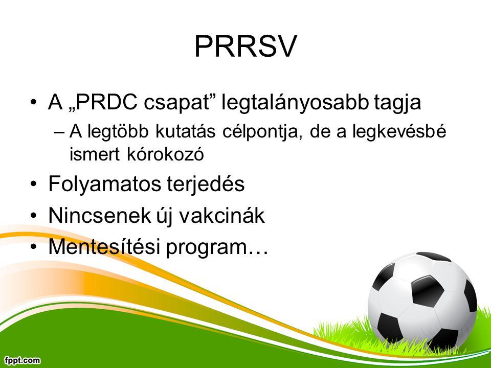 """PRRSV A """"PRDC csapat legtalányosabb tagja Folyamatos terjedés"""