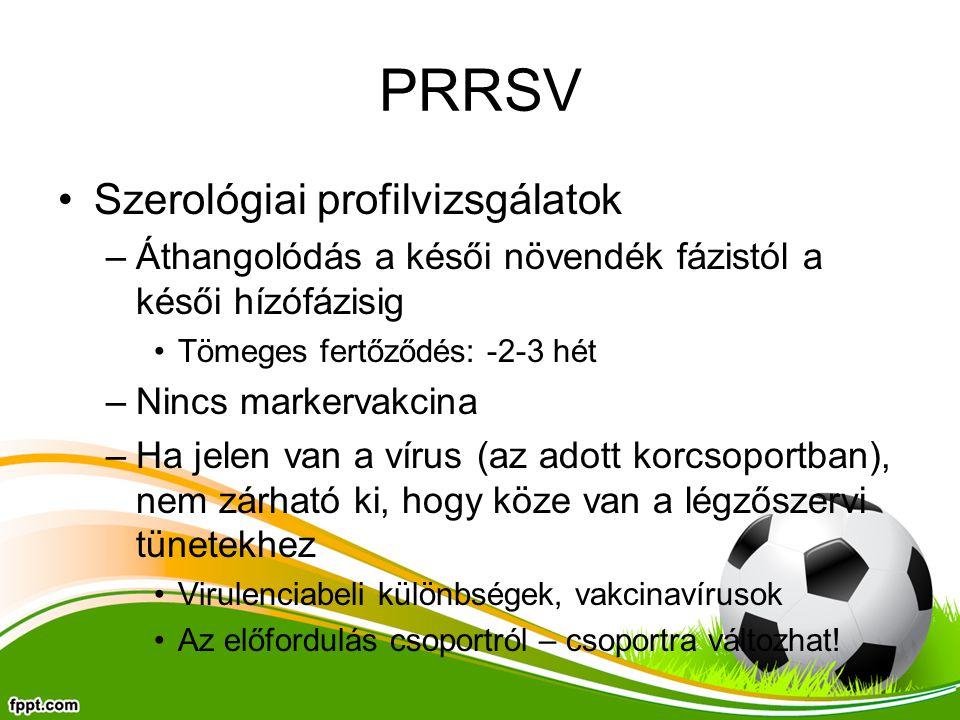 PRRSV Szerológiai profilvizsgálatok