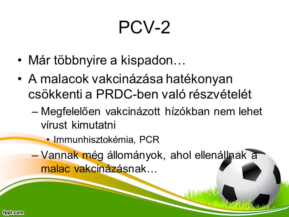 PCV-2 Már többnyire a kispadon…