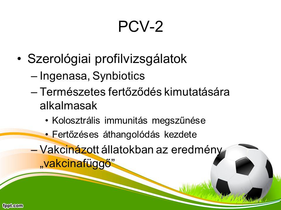 PCV-2 Szerológiai profilvizsgálatok Ingenasa, Synbiotics