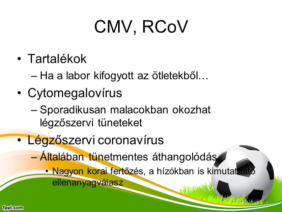 CMV, RCoV Tartalékok Cytomegalovírus Légzőszervi coronavírus