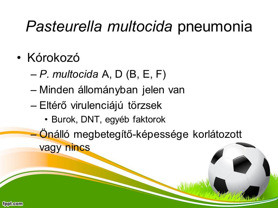 Pasteurella multocida pneumonia