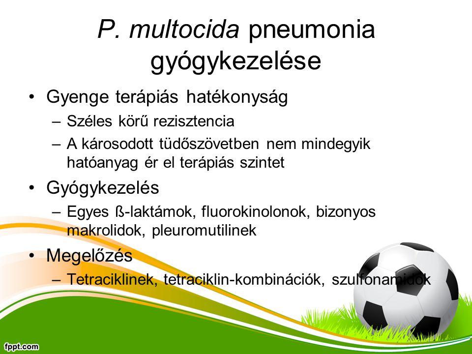 P. multocida pneumonia gyógykezelése