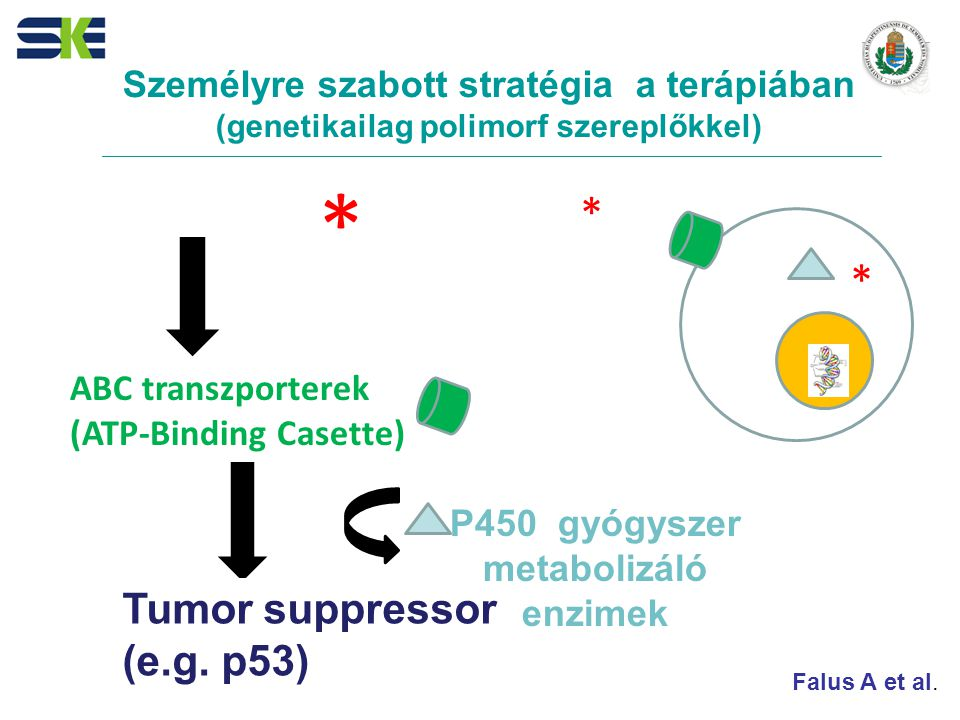 * * * Tumor suppressor (e.g. p53)