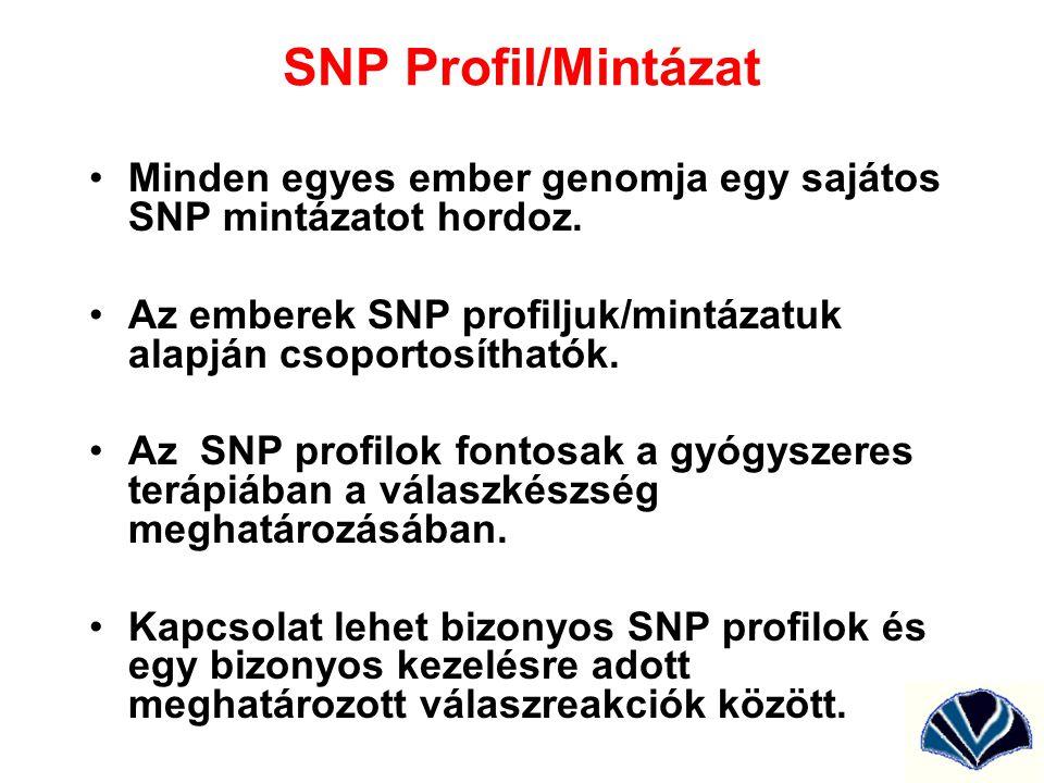 SNP Profil/Mintázat Minden egyes ember genomja egy sajátos SNP mintázatot hordoz. Az emberek SNP profiljuk/mintázatuk alapján csoportosíthatók.