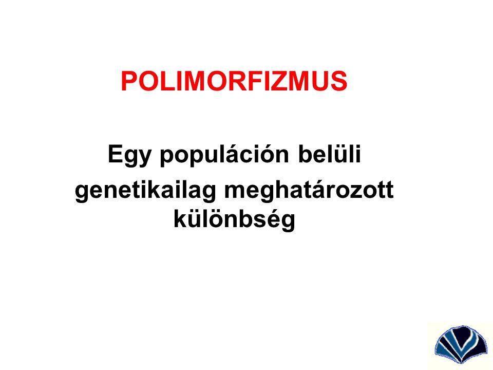 Egy populáción belüli genetikailag meghatározott különbség