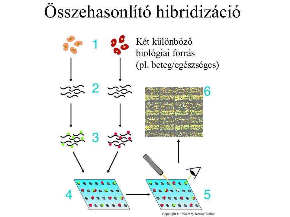 Összehasonlító hibridizáció