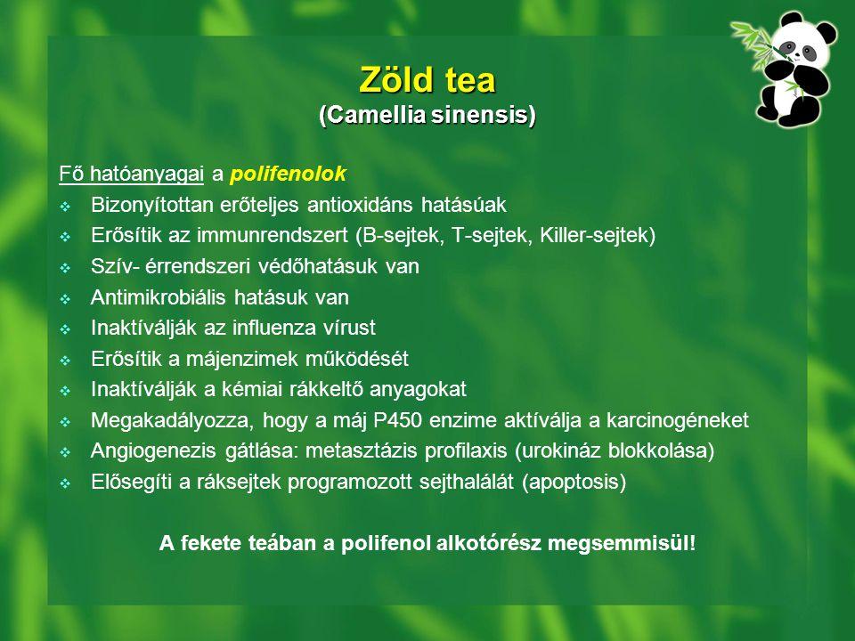 Zöld tea (Camellia sinensis)