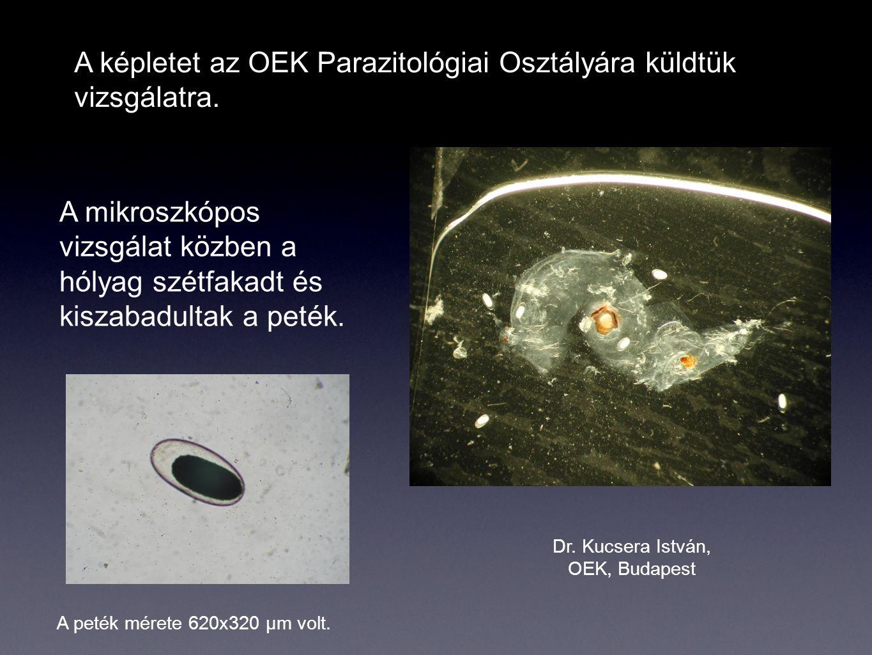 Dr. Kucsera István, OEK, Budapest