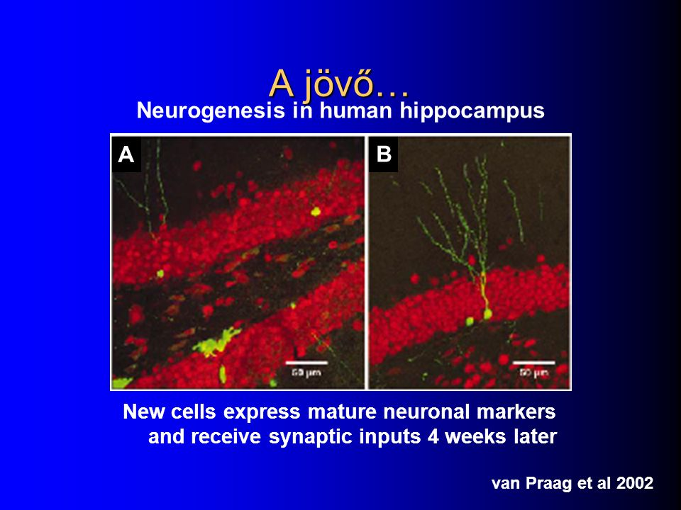 Neurogenesis in human hippocampus