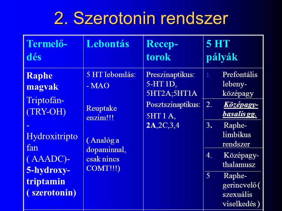 2. Szerotonin rendszer Termelő-dés Lebontás Recep-torok 5 HT pályák