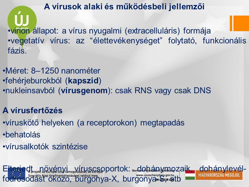 A vírusok alaki és működésbeli jellemzői