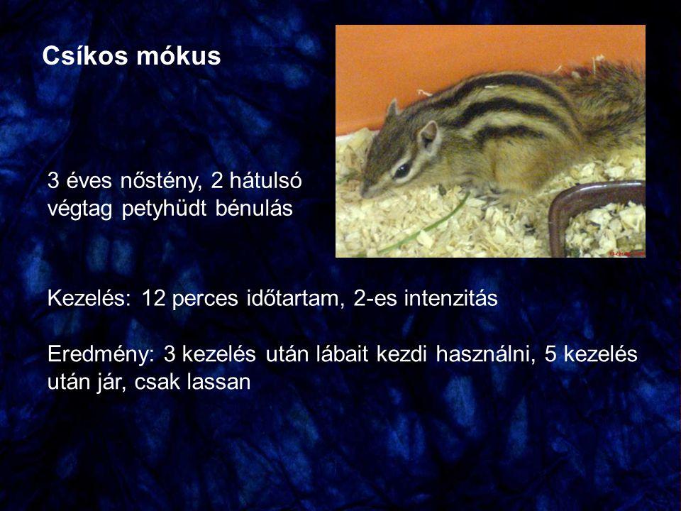Csíkos mókus 3 éves nőstény, 2 hátulsó végtag petyhüdt bénulás