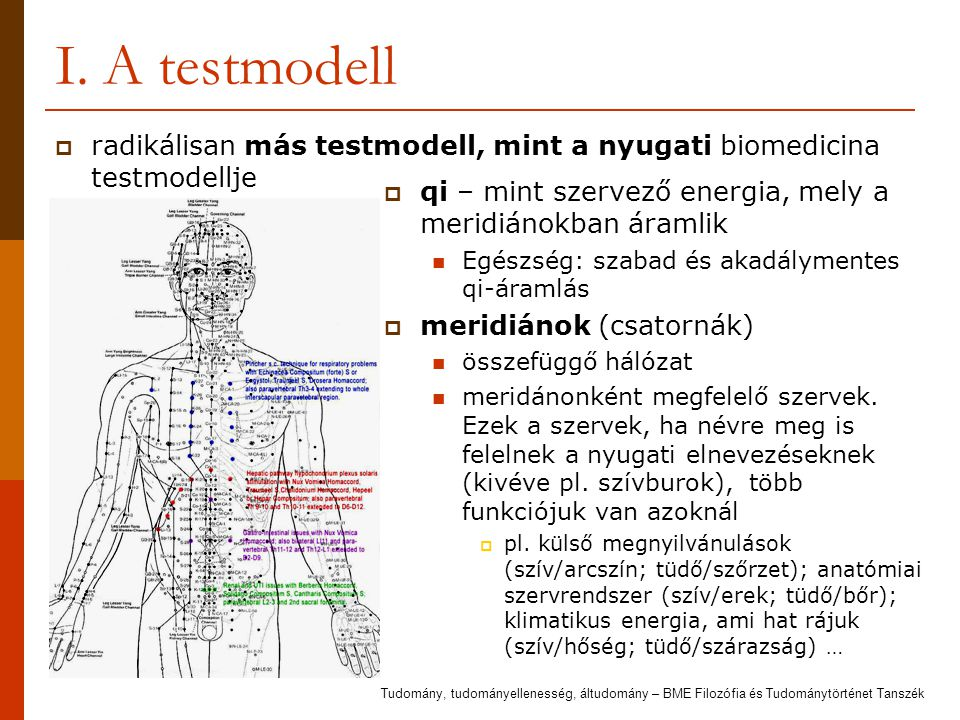 I. A testmodell radikálisan más testmodell, mint a nyugati biomedicina testmodellje. qi – mint szervező energia, mely a meridiánokban áramlik.